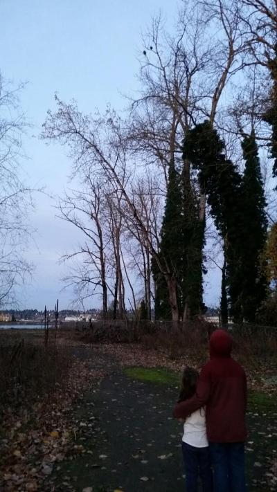 Kids watching two bald eagles in a tree in Portland