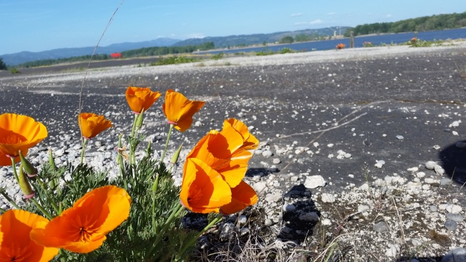 Wildflowers and beautiful scenery was easy to find during our stay at the St Helens Public Dock