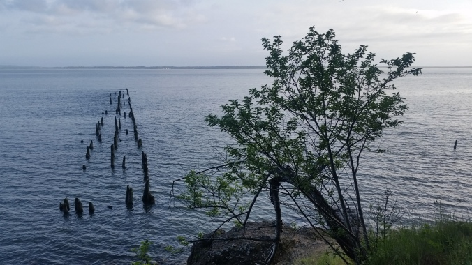 Remnants of the old supply dock at Fort Columbia