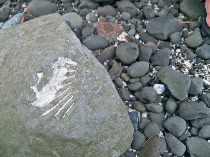 Amateur fossil hunting in Fossil Bay on Sucia Island